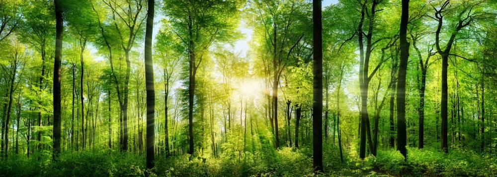 slonce-panorama-buk-natura.jpg