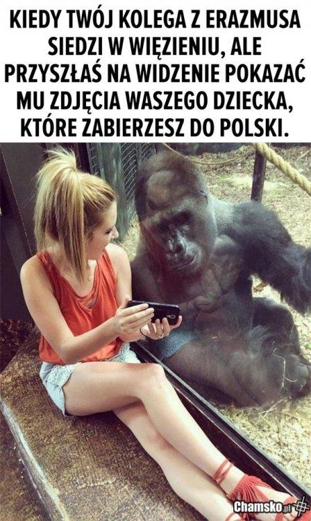 0_1_84034_Wyjazd_do_polski_przez_pluszowymis.jpg