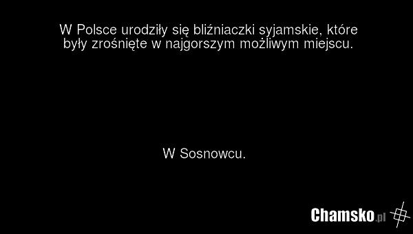 0_1_84480_Blizniaki_syjamskie_przez_pluszowymis.png