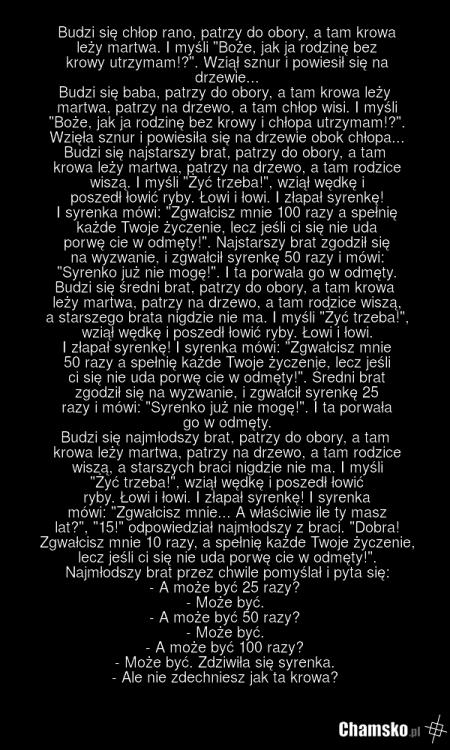 0_1_87855_Martwa_krowa_przez_pluszowymis.png